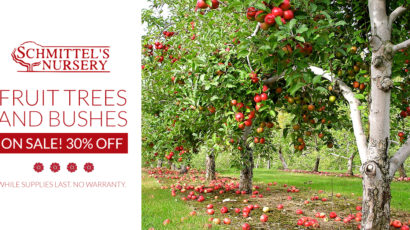 Fruit Tree and Bush Sale