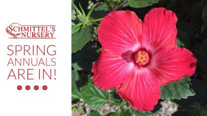 schmittels-spring-annuals-ad