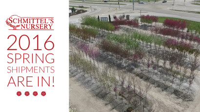 Schmittel's Nursery 2016 Spring Shipments are now in stock.