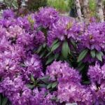 schmittels-nursery-may-2014-local-flowers (11 of 32)