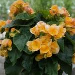 schmittels-nursery-may-2014-local-flowers (14 of 32)