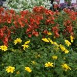 schmittels-nursery-may-2014-local-flowers (21 of 32)