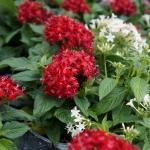 schmittels-nursery-may-2014-local-flowers (22 of 32)