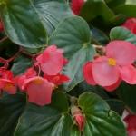 schmittels-nursery-may-2014-local-flowers (26 of 32)