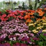 schmittels-nursery-may-2014-local-flowers (30 of 32)