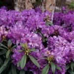 schmittels-nursery-may-2014-local-flowers (9 of 32)