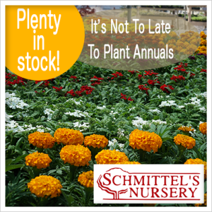 Annuals In Stock