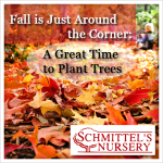 Fall is Just Around the Corner: A Great Time to Plant Trees schmittels nursery