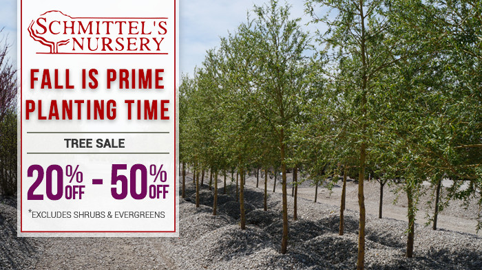 Fall Tree Sale 2015