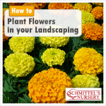 How To Plant Flowers In Your Landscaping