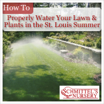 how to properly water your lawn and plants in the st louis summer