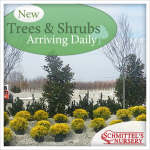 New Trees and Shrubs Arriving Daily