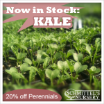 now in stock kale
