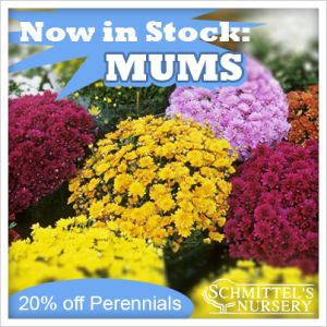 now in stock mums