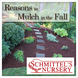 reasons to mulch in the fall