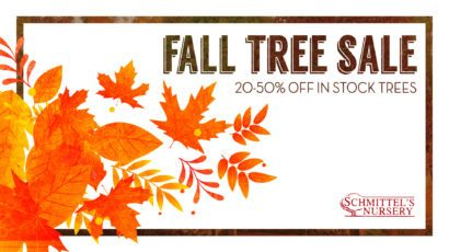 Schmittel's Fall Tree Sale 2018