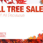 Schmittel's Fall Tree Sale 2019
