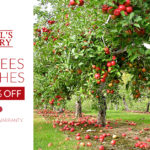 Fruit Tree and Bush Sale