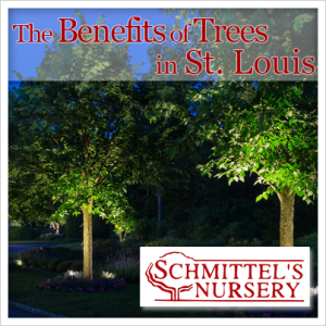 the benefits of trees in st louis