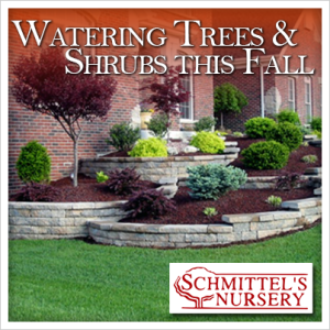 watering trees and shrubs this fall